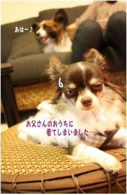 コピー ~ komugiko