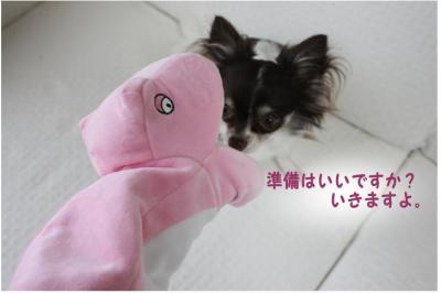 コピー (5) ~ 新入り