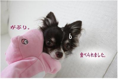 コピー (2) ~ 新入り