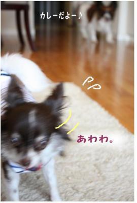 コピー (3) ~ お留守番