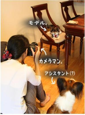 コピー (8) ~ お留守番