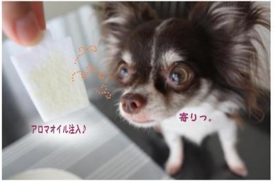 コピー (6) ~ エコポイント