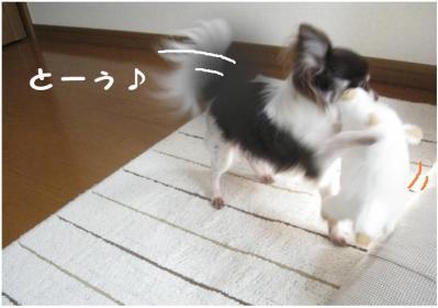 コピー (6) ~ ぶーちゃん