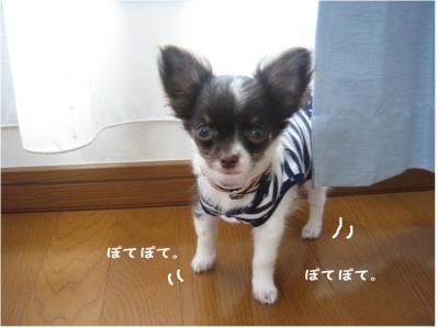 コピー (2) ~ ぶーちゃん