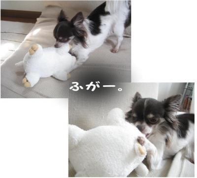 コピー (7) ~ ぶーちゃん