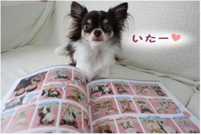 コピー (4) ~ チワファン