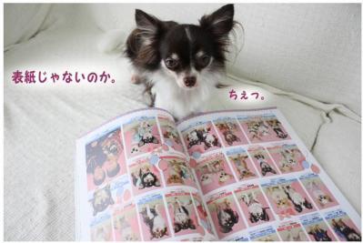 コピー (3) ~ チワファン
