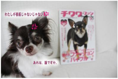 コピー (2) ~ チワファン