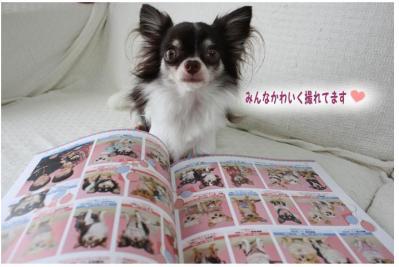 コピー (7) ~ チワファン