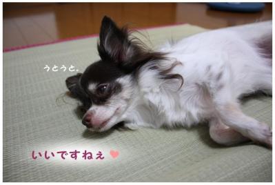 コピー (3) ~ ござ