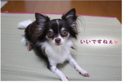 コピー (2) ~ ござ
