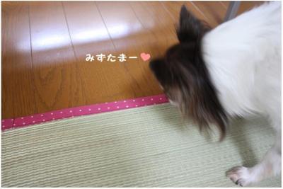 コピー ~ ござ