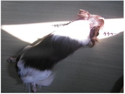 コピー (3) ~ ライト