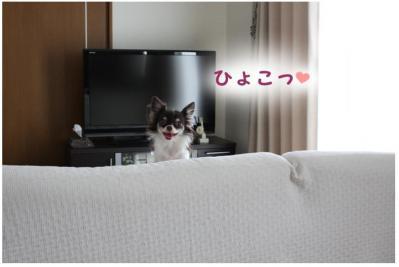 コピー (4) ~ カリカリ