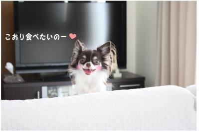 コピー (7) ~ カリカリ