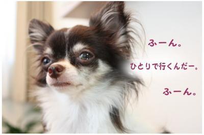 コピー (7) ~ ドリポ