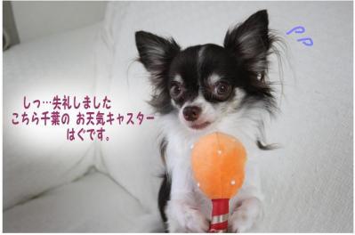 コピー (2) ~ お天気