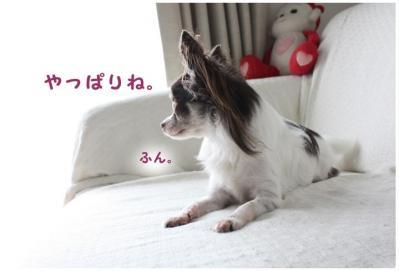コピー ~ お天気