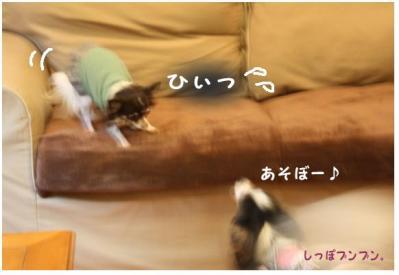 コピー (4) ~ マロむぎの森