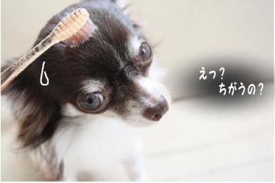 コピー (6) ~ 歯ブラシ