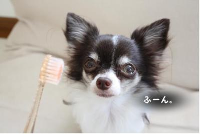 コピー (2) ~ 歯ブラシ