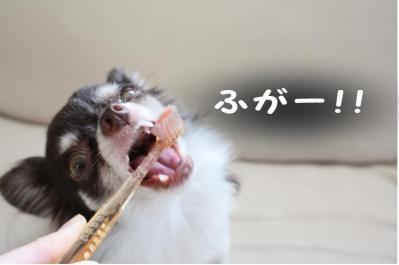 コピー (9) ~ 歯ブラシ