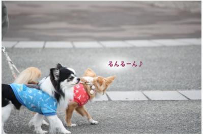 コピー (13) ~ ツアー