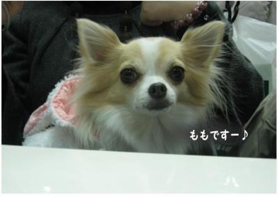コピー (6) ~ ペット博