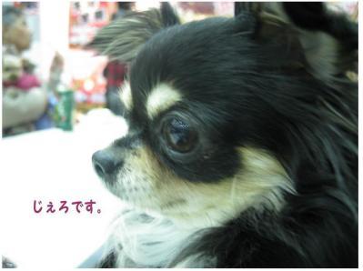 コピー (3) ~ ペット博