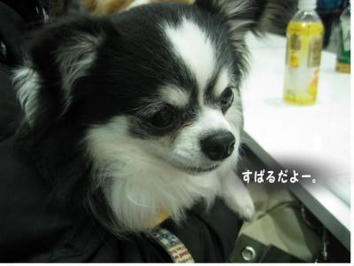 コピー (7) ~ ペット博