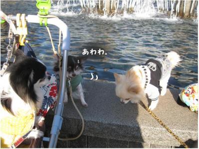 コピー (16) ~ ペット博