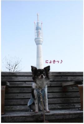 コピー (5) ~ コピー ~ スカイツリー2