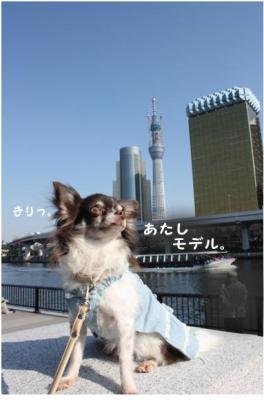 コピー (8) ~ コピー ~ スカイツリー2
