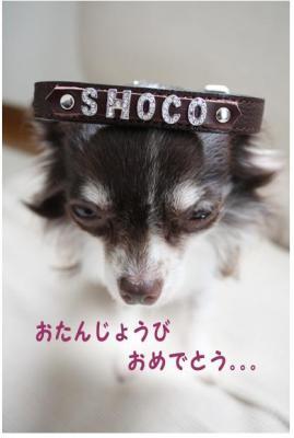 コピー (5) ~ choco