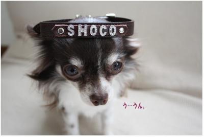 コピー (3) ~ choco