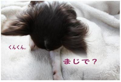 コピー (4) ~ 花粉