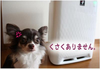 コピー (2) ~ 花粉