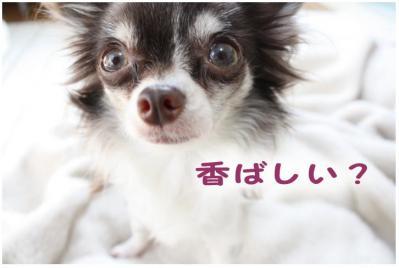 コピー (3) ~ 花粉