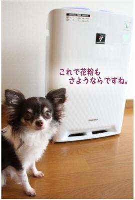 コピー ~ 花粉