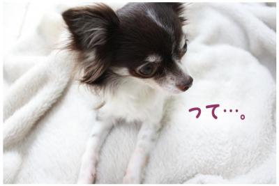 コピー (7) ~ 花粉