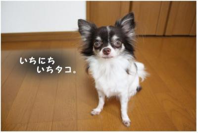 コピー ~ ギネス