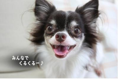 コピー (2) ~ ギネス