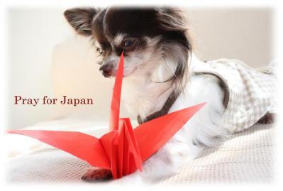 コピー ~ Pray for Japan