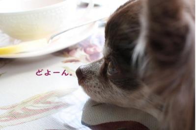 コピー (3) ~ ざおー