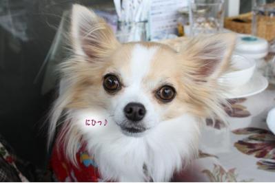 コピー (2) ~ ざおー