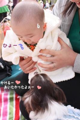 コピー (5) ~ sakura2010