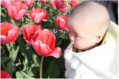 コピー (10) ~ sakura2010