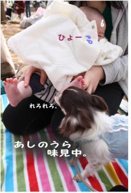コピー (6) ~ sakura2010
