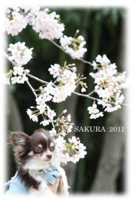 コピー ~ sakura2010