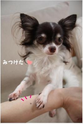 コピー (4) ~ ブーム
